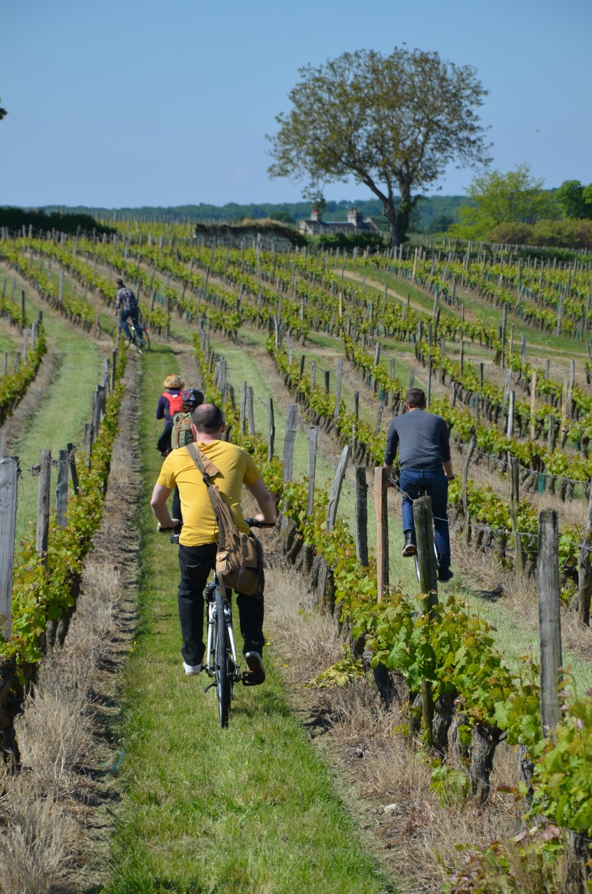 Cycling in the Saumur-Champigny vineyards